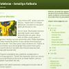 RADYO | Efektifpas 21.07.2014 – Futebras Blogu yazarı Emrah İmre ile söyleşi
